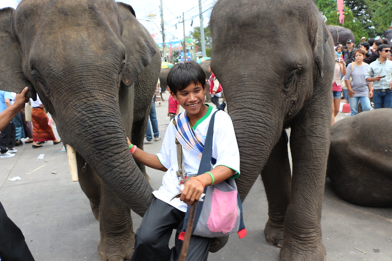 2014-11-14 Surin Elephant Welcome Feast 692