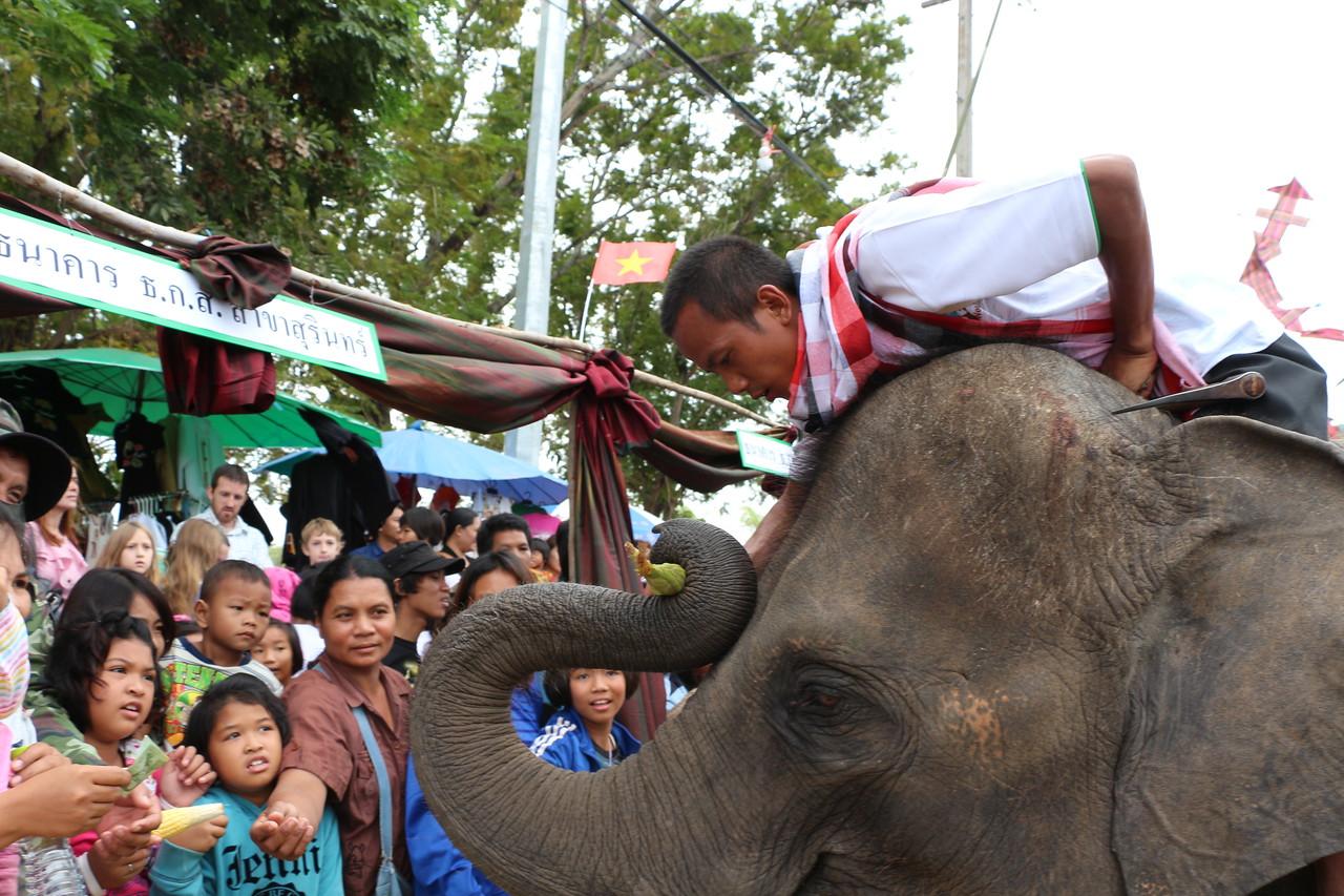 2014-11-14 Surin Elephant Welcome Feast 324