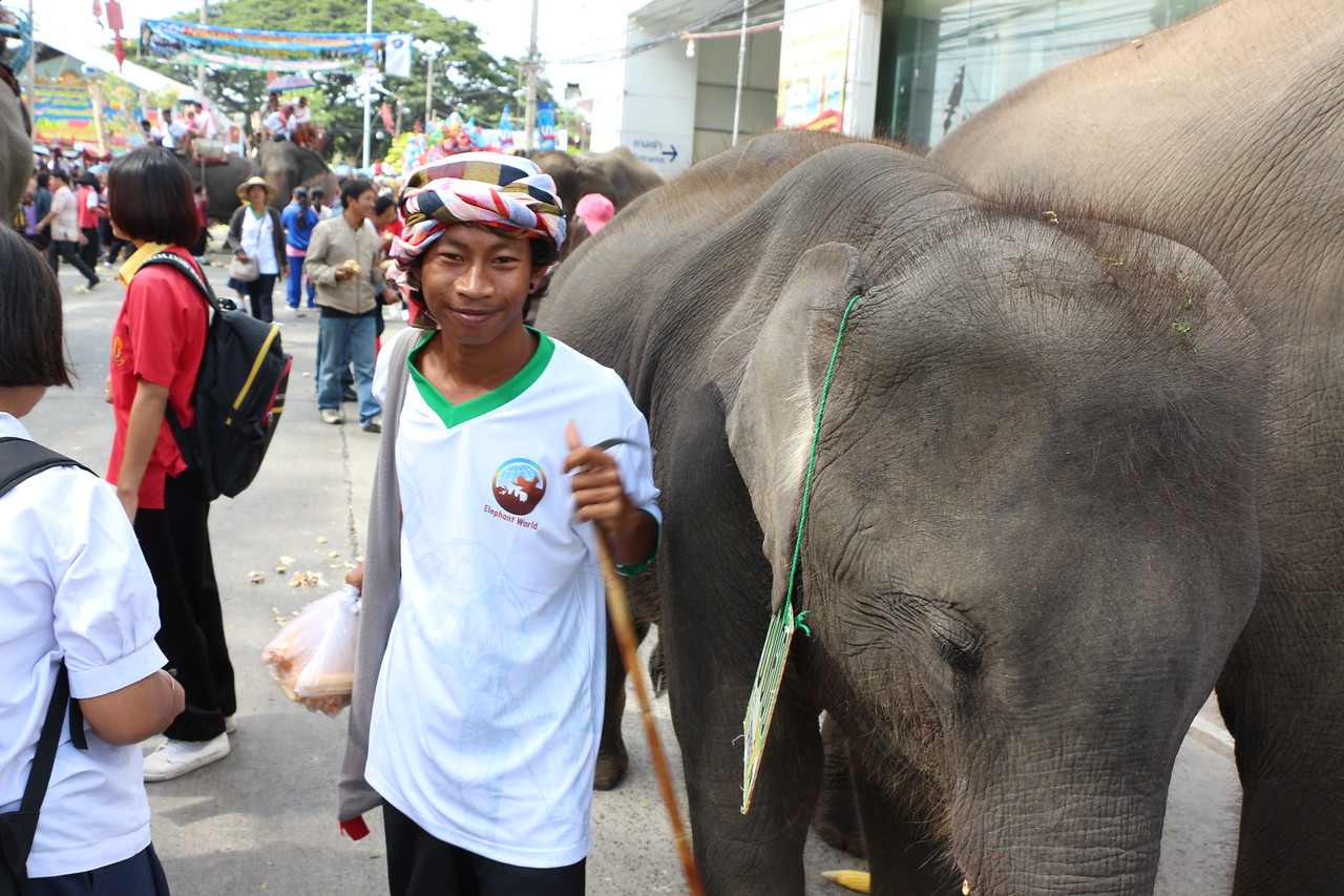 2014-11-14 Surin Elephant Welcome Feast 393