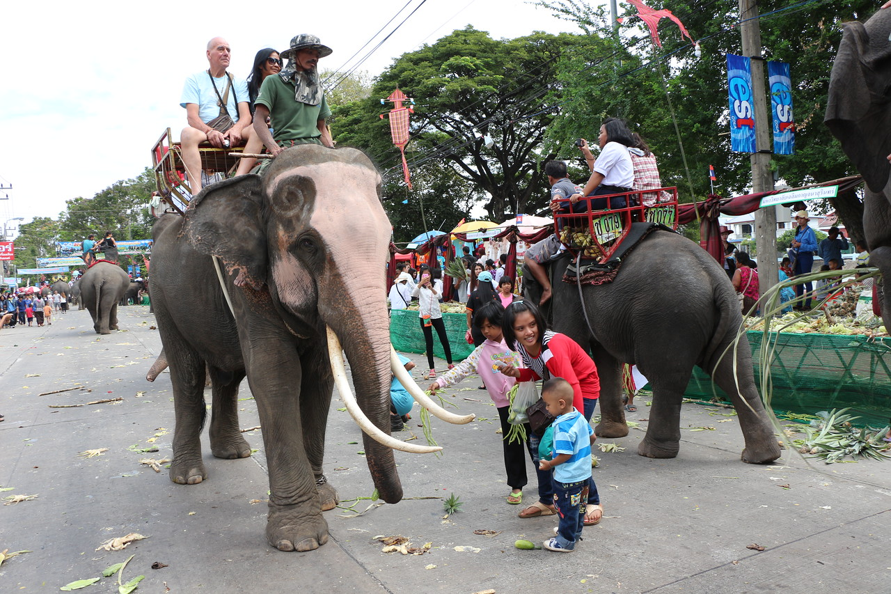 2014-11-14 Surin Elephant Welcome Feast 574