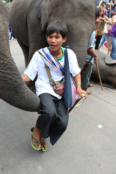 2014-11-14 Surin Elephant Welcome Feast 698