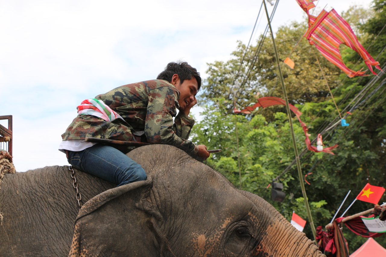 2014-11-14 Surin Elephant Welcome Feast 582