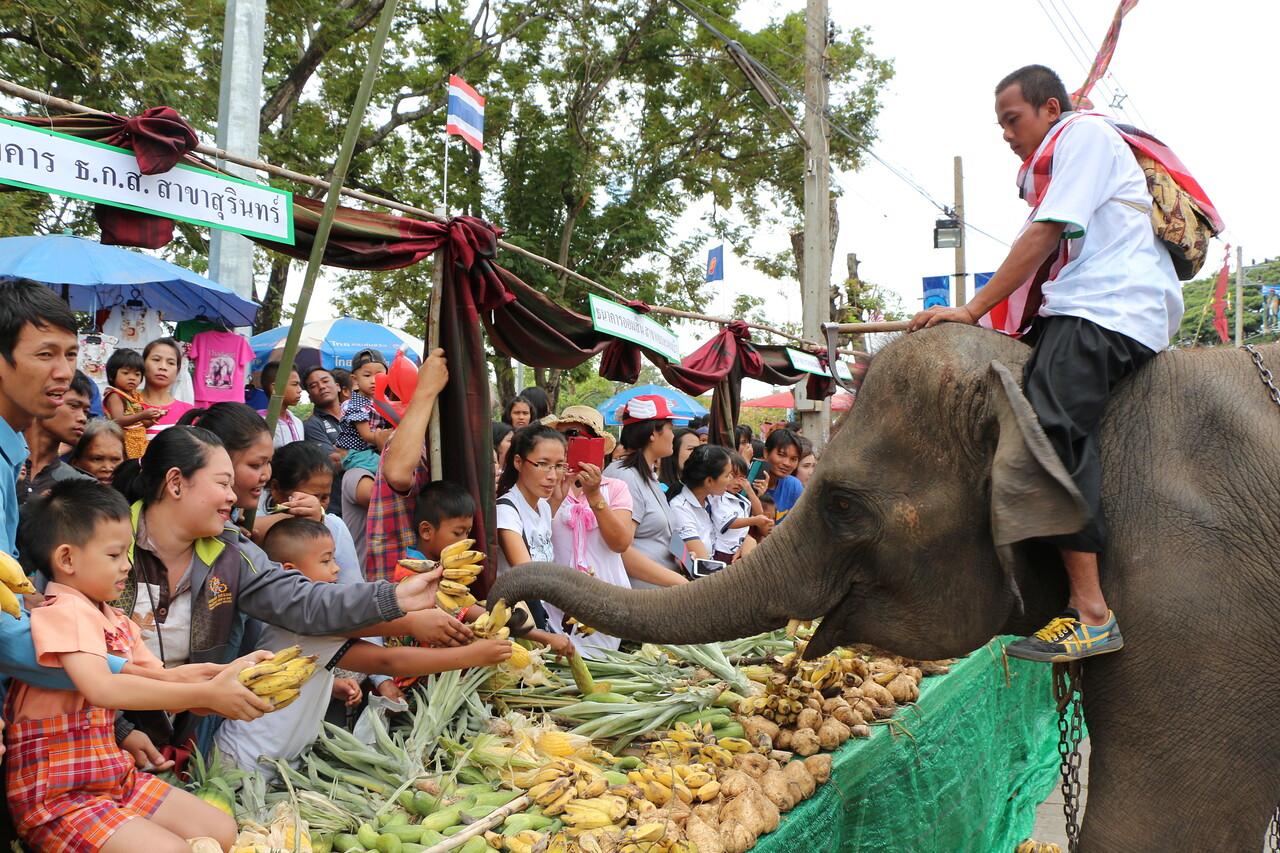 2014-11-14 Surin Elephant Welcome Feast 293