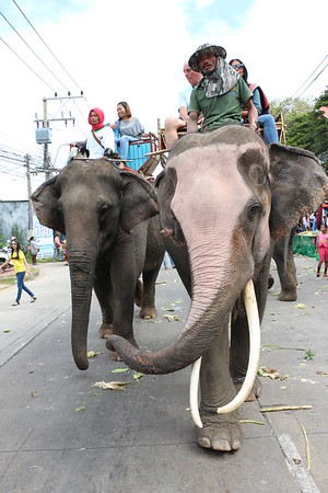 2014-11-14 Elephant Welcome Parade