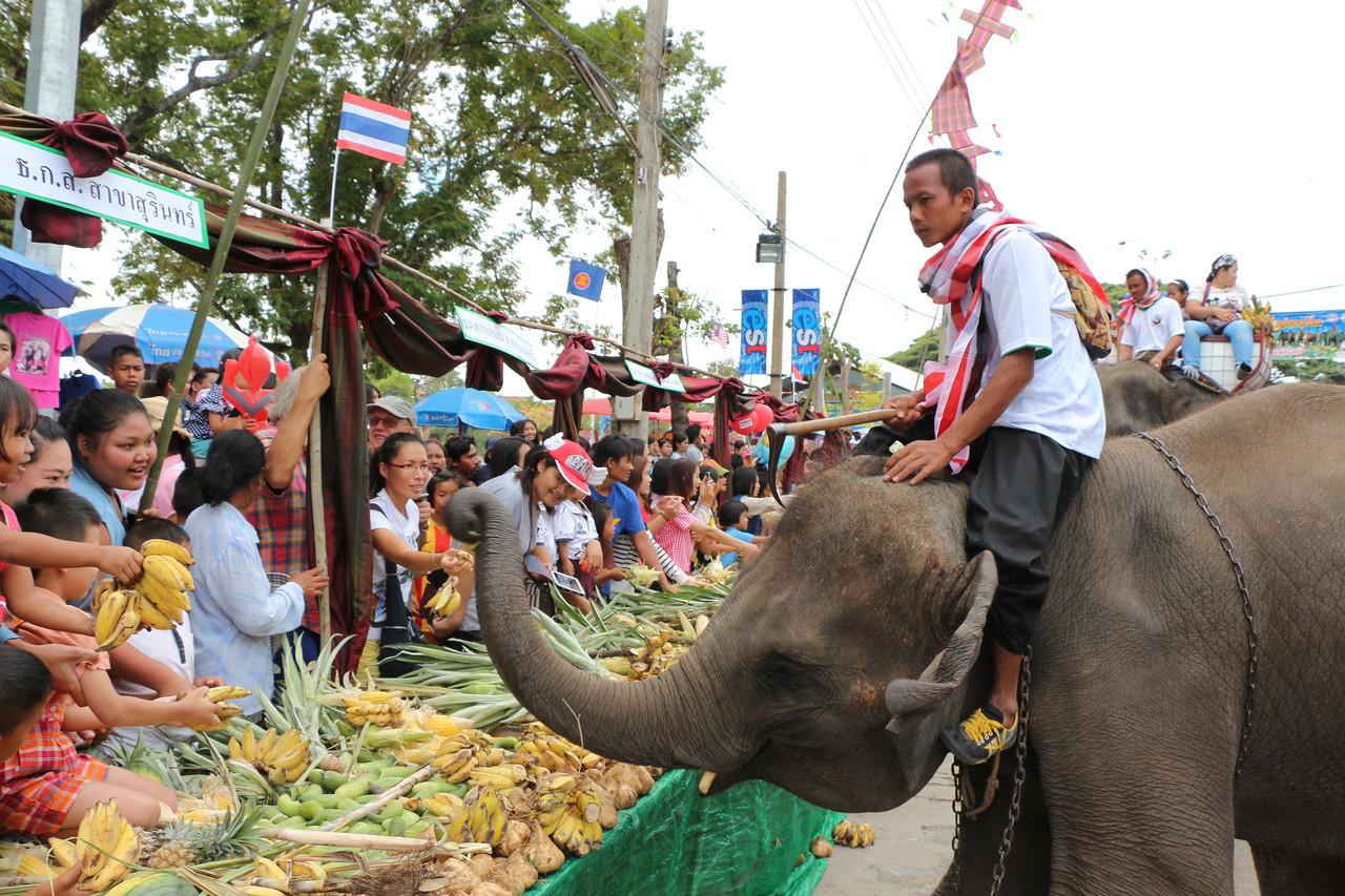 2014-11-14 Surin Elephant Welcome Feast 299