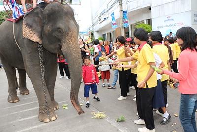 2014-11-14 Surin Elephant Welcome Feast 277