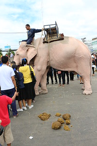 2014-11-14 Surin Elephant Welcome Feast 611