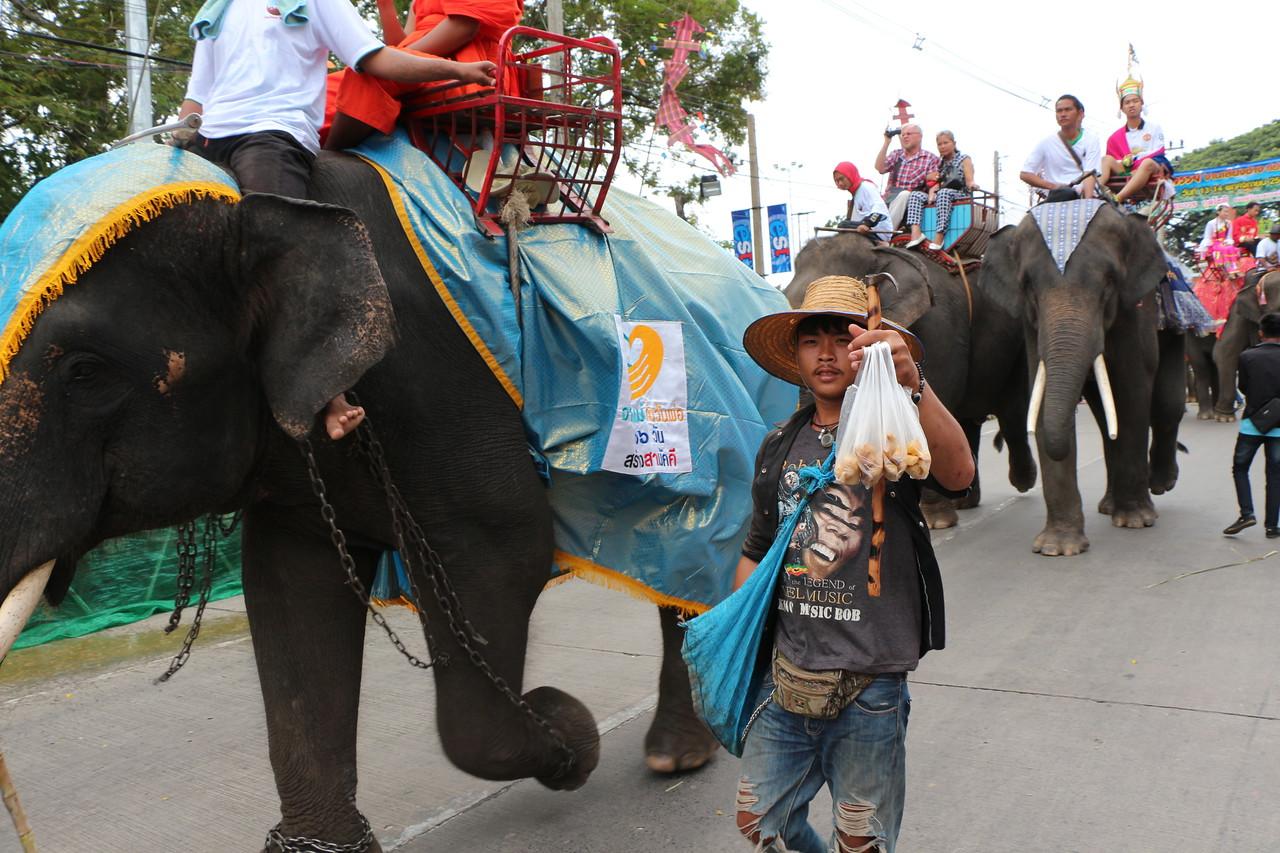 2014-11-14 Surin Elephant Welcome Feast 209