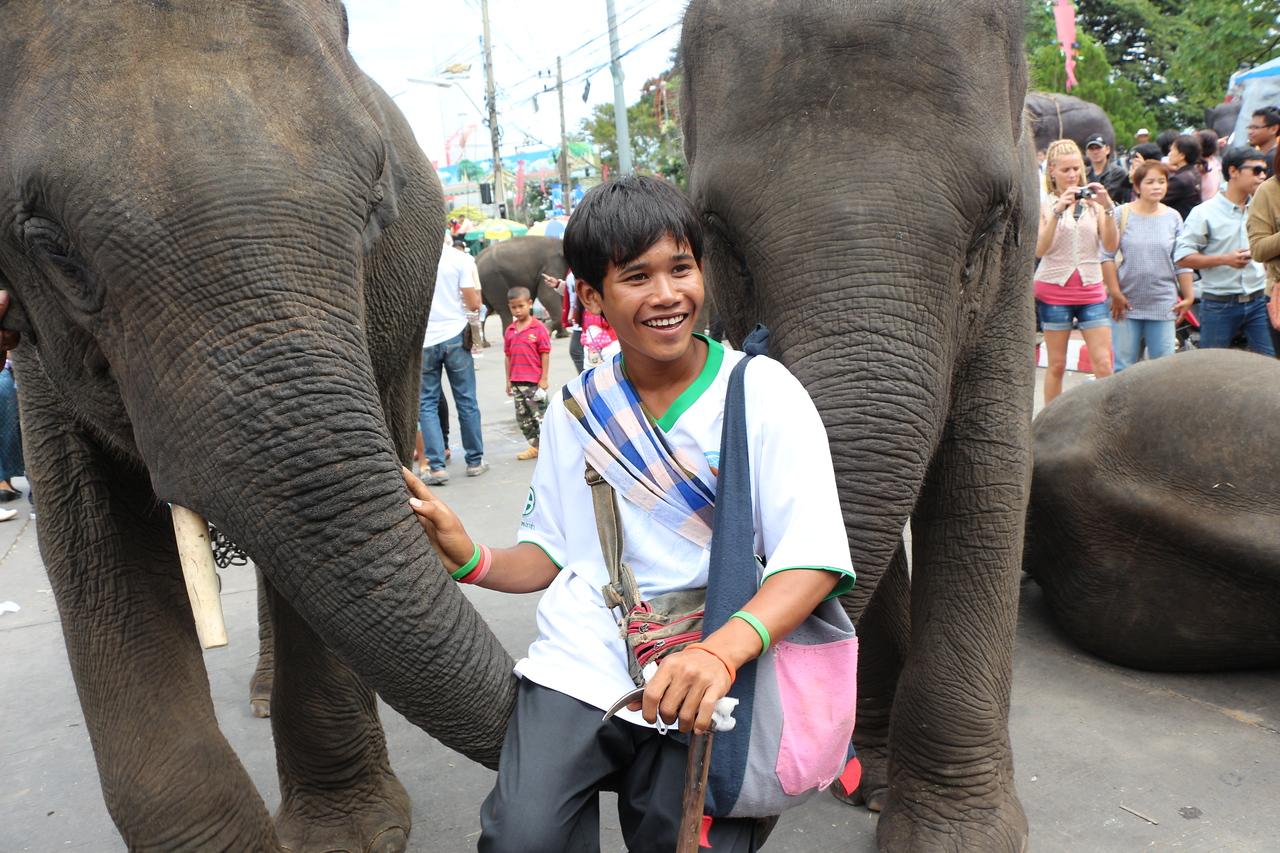 2014-11-14 Surin Elephant Welcome Feast 693