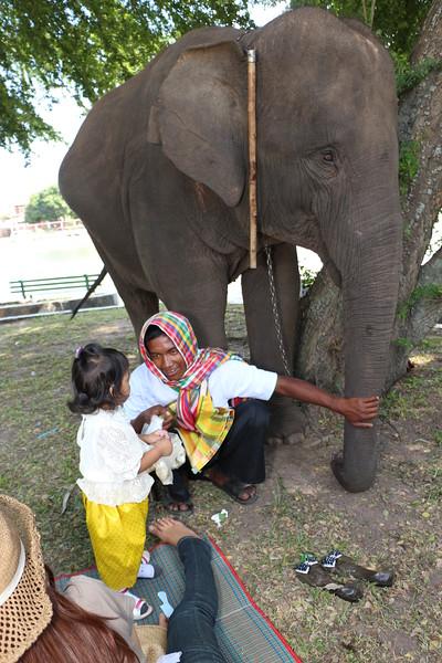 2014-11-14 Surin Elephant Welcome Feast 902.JPG