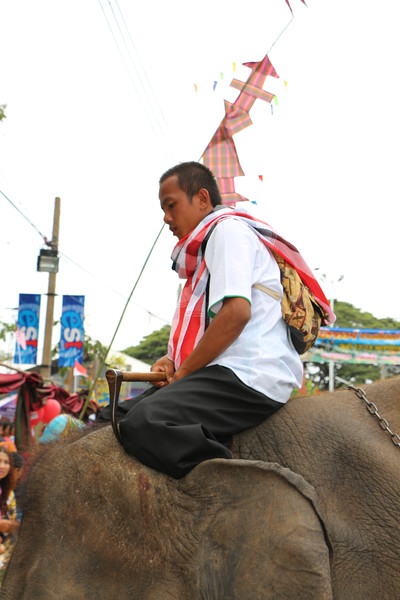 2014-11-14 Surin Elephant Welcome Feast 303.JPG