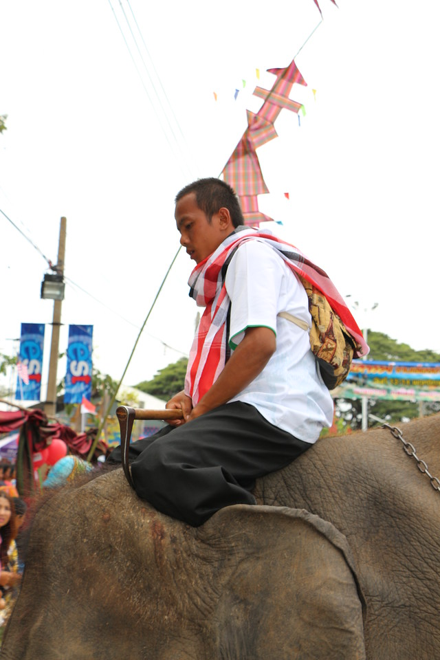 2014-11-14 Surin Elephant Welcome Feast 303