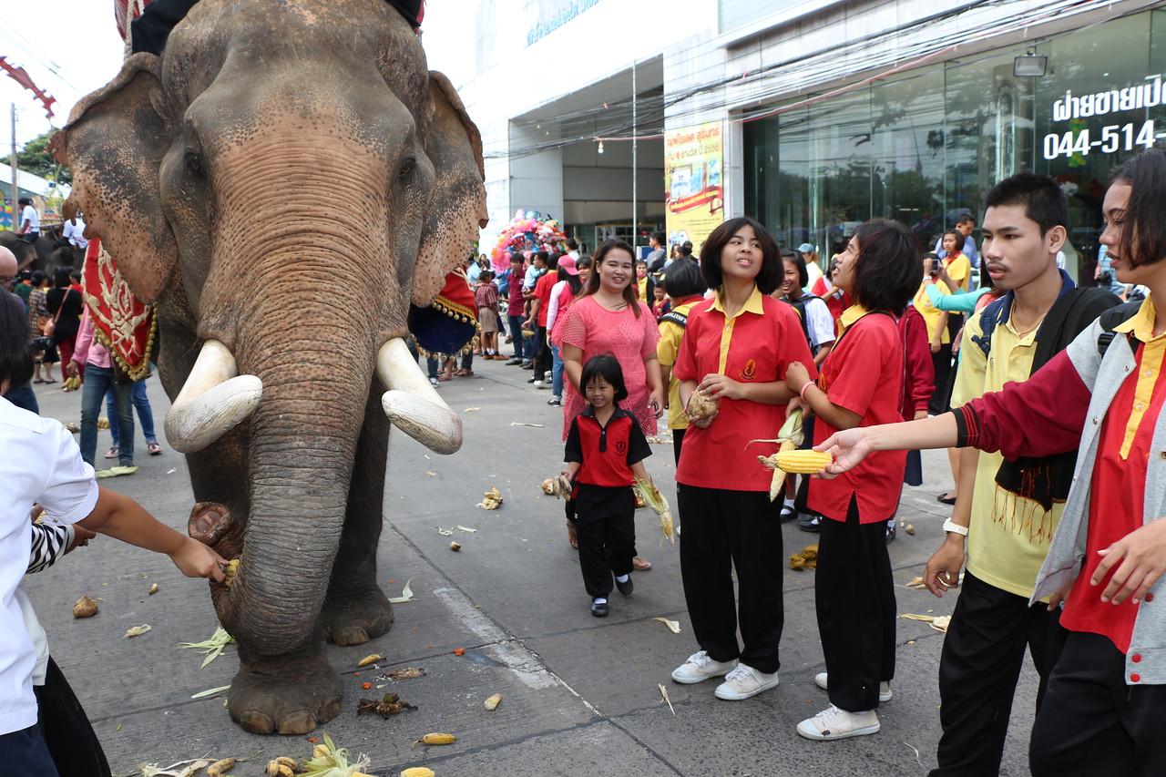 2014-11-14 Surin Elephant Welcome Feast 363