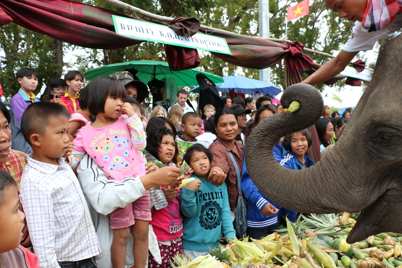 2014-11-14 Surin Elephant Welcome Feast 323.JPG