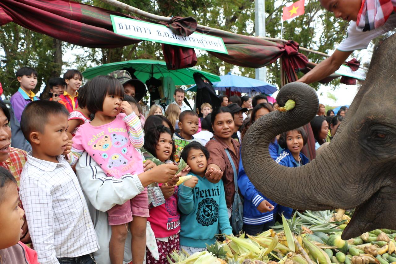 2014-11-14 Surin Elephant Welcome Feast 323