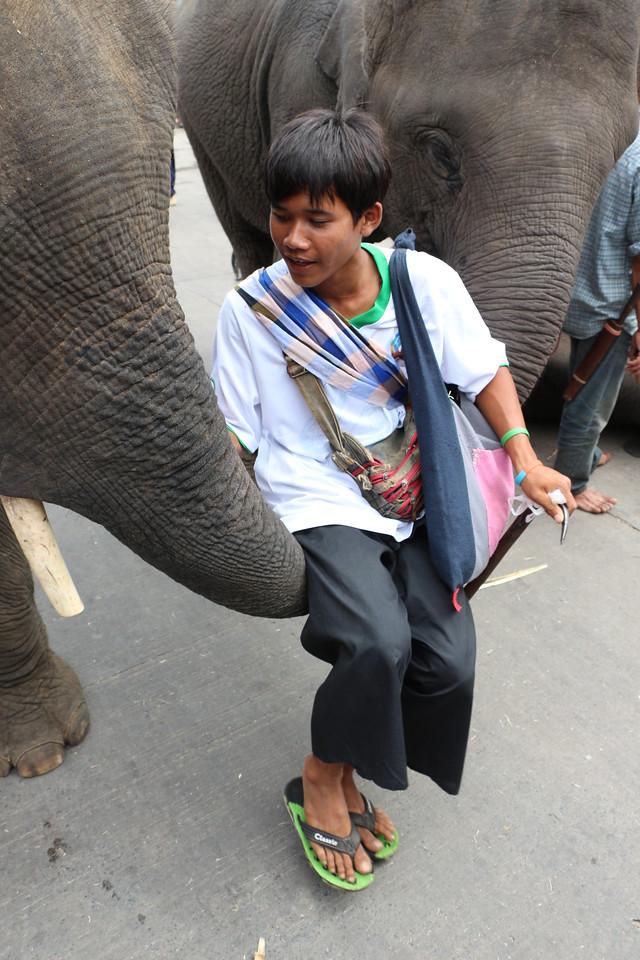 2014-11-14 Surin Elephant Welcome Feast 699
