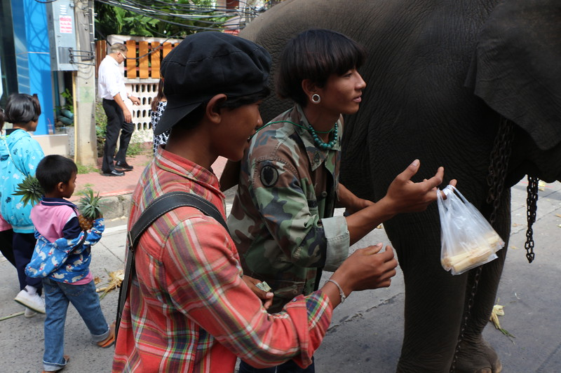 2014-11-14 Surin Elephant Welcome Feast 429.JPG
