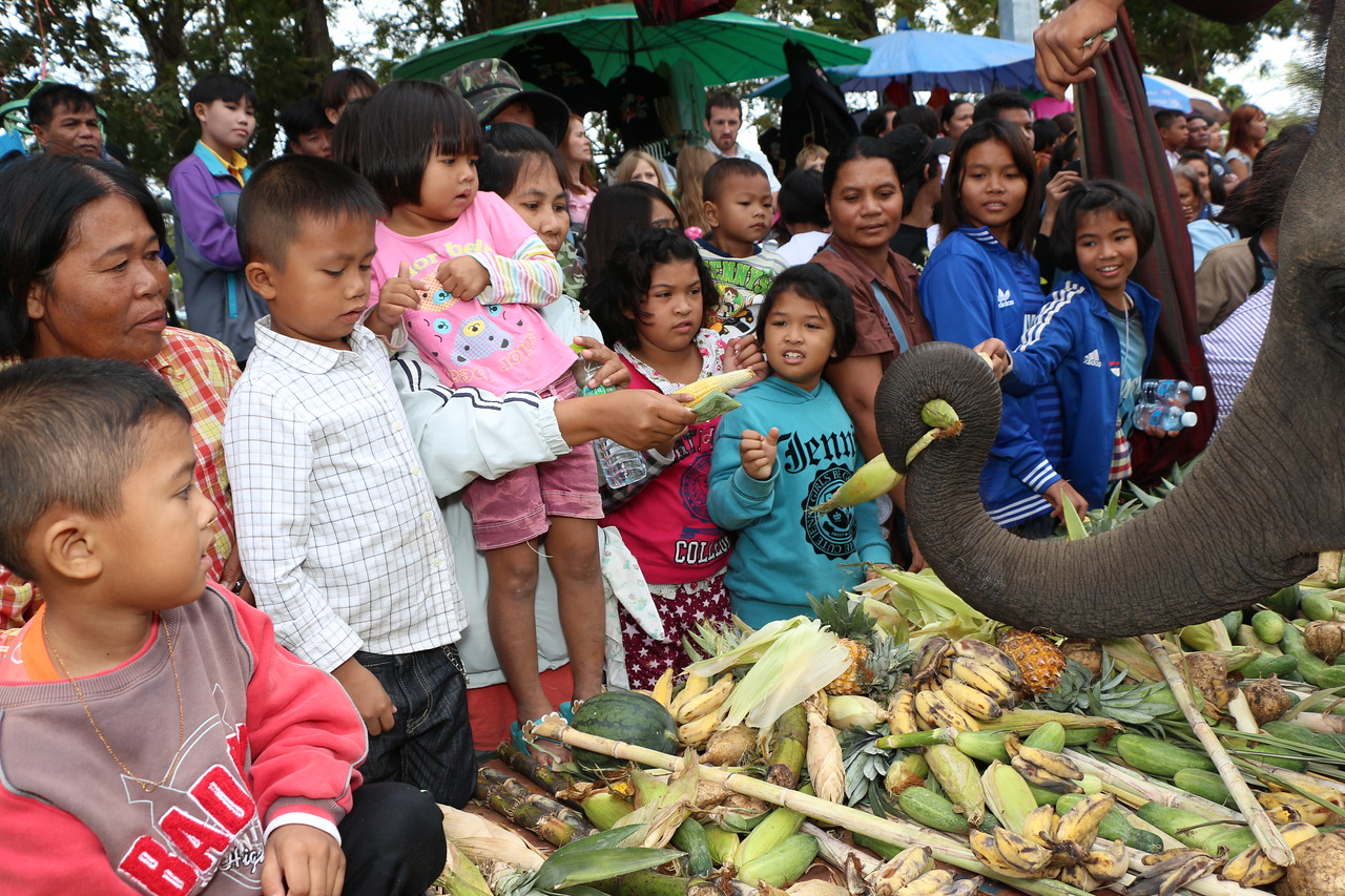 2014-11-14 Surin Elephant Welcome Feast 321