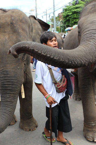 2014-11-14 Surin Elephant Welcome Feast 728