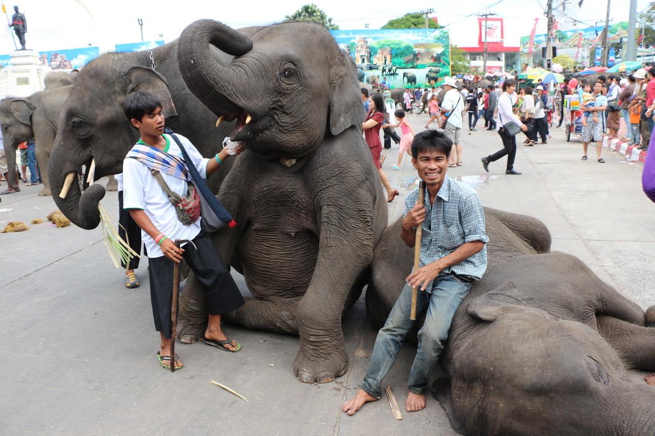 2014-11-14 Surin Elephant Welcome Feast 682
