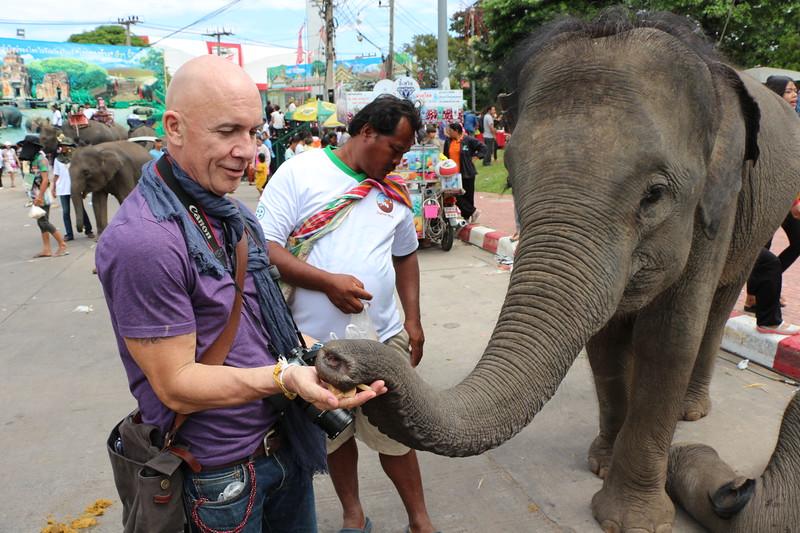 2014-11-14 Surin Elephant Welcome Feast 798.JPG