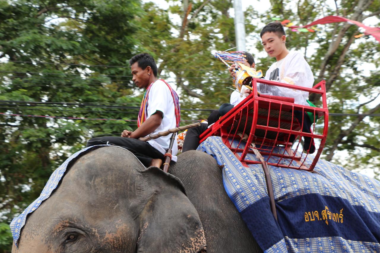 2014-11-14 Surin Elephant Welcome Feast 202