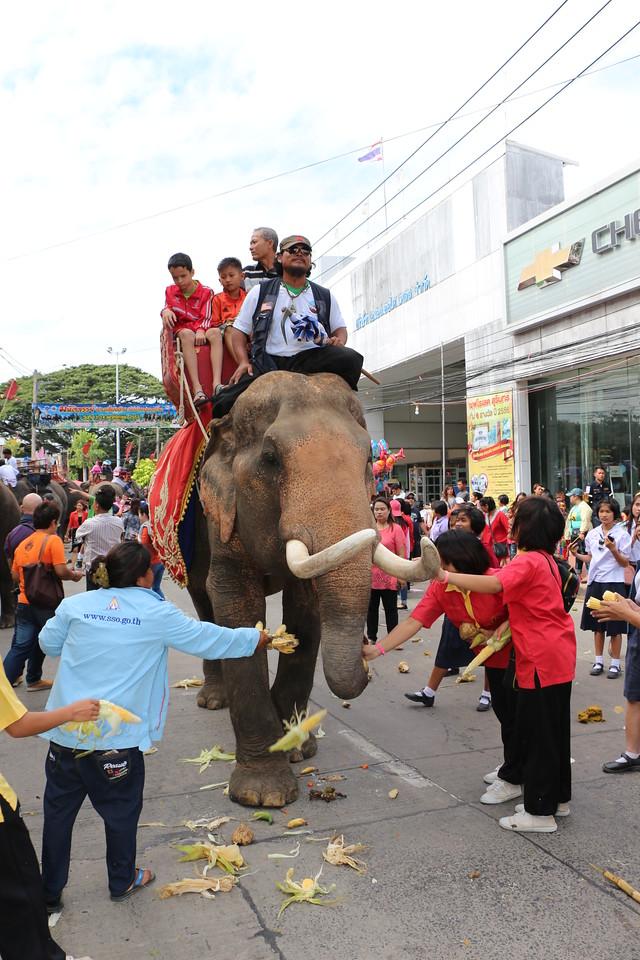 2014-11-14 Surin Elephant Welcome Feast 358