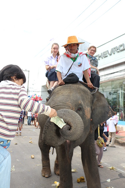 2014-11-14 Surin Elephant Welcome Feast 370.JPG