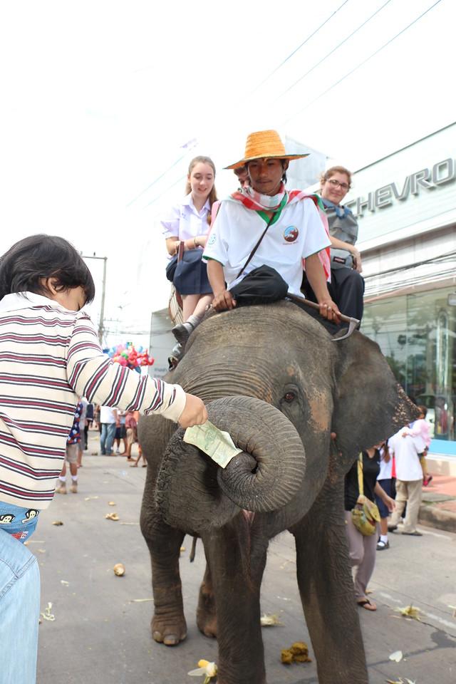 2014-11-14 Surin Elephant Welcome Feast 370