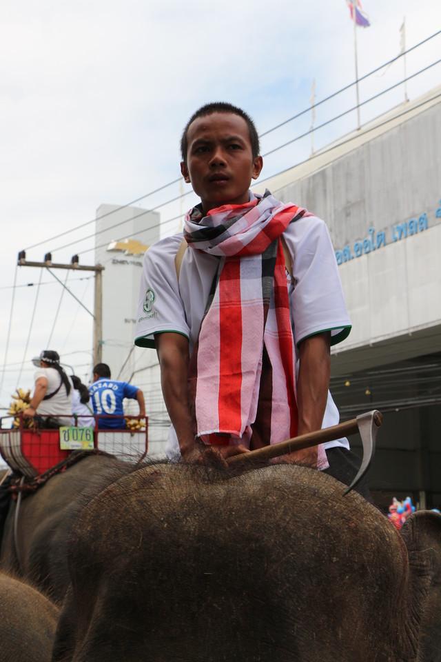 2014-11-14 Surin Elephant Welcome Feast 320