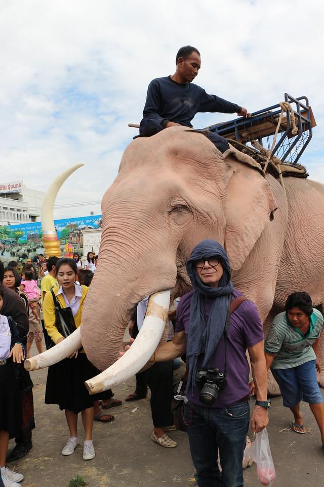 2014-11-14 Surin Elephant Welcome Feast 633