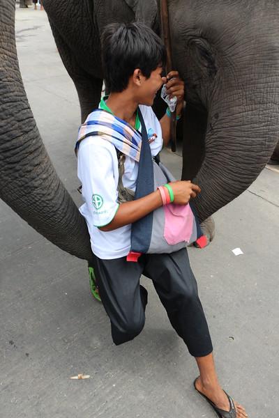 2014-11-14 Surin Elephant Welcome Feast 713.JPG