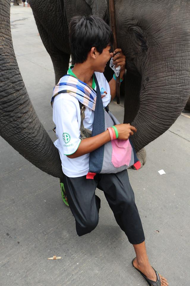 2014-11-14 Surin Elephant Welcome Feast 713