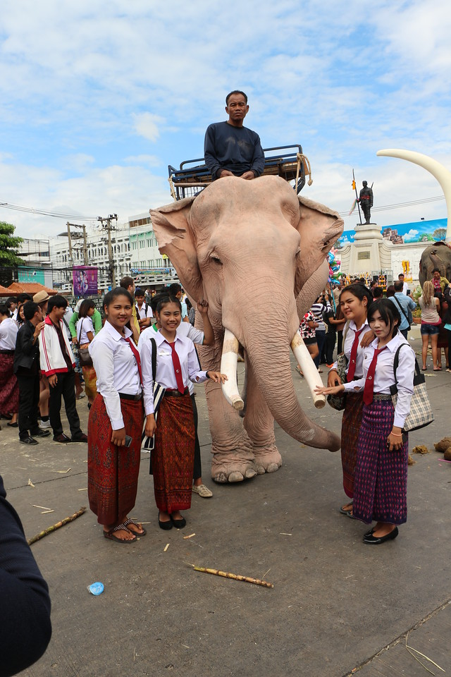 2014-11-14 Surin Elephant Welcome Feast 760