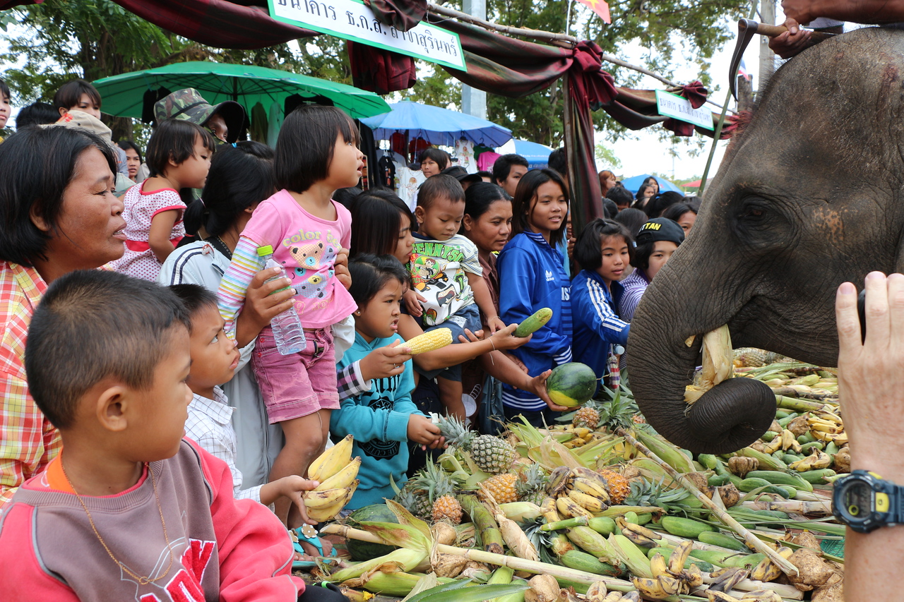 2014-11-14 Surin Elephant Welcome Feast 327