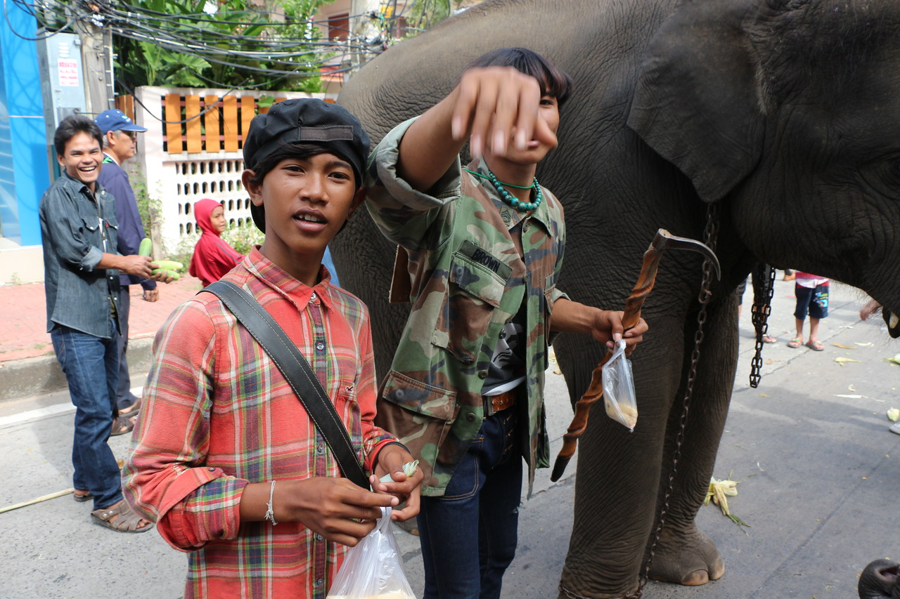 2014-11-14 Surin Elephant Welcome Feast 432