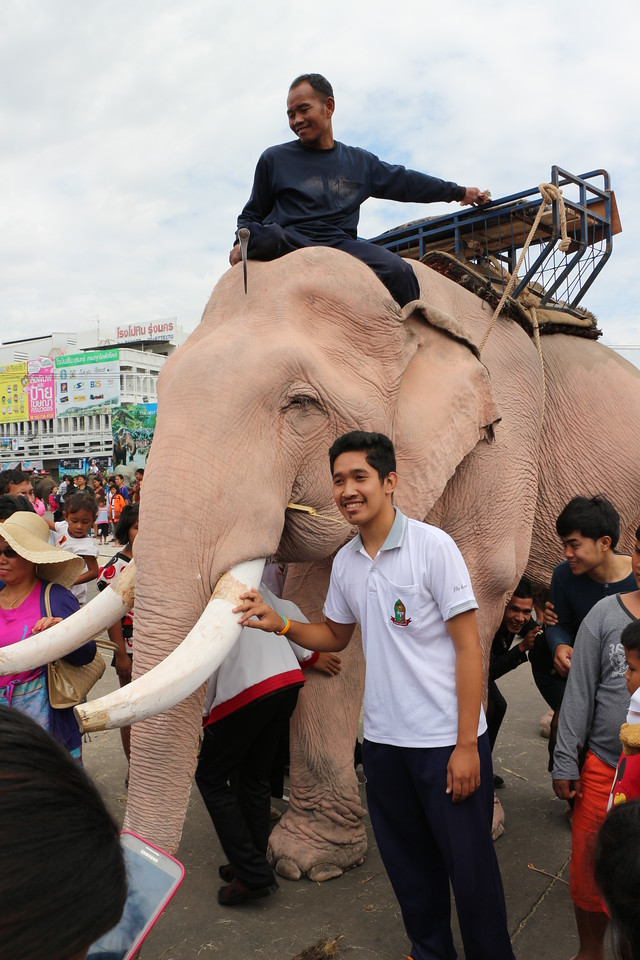 2014-11-14 Surin Elephant Welcome Feast 617