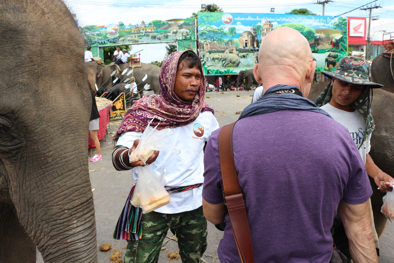 2014-11-14 Surin Elephant Welcome Feast 829