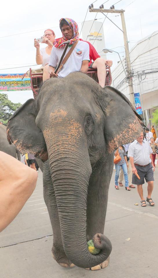 2014-11-14 Surin Elephant Welcome Feast 232
