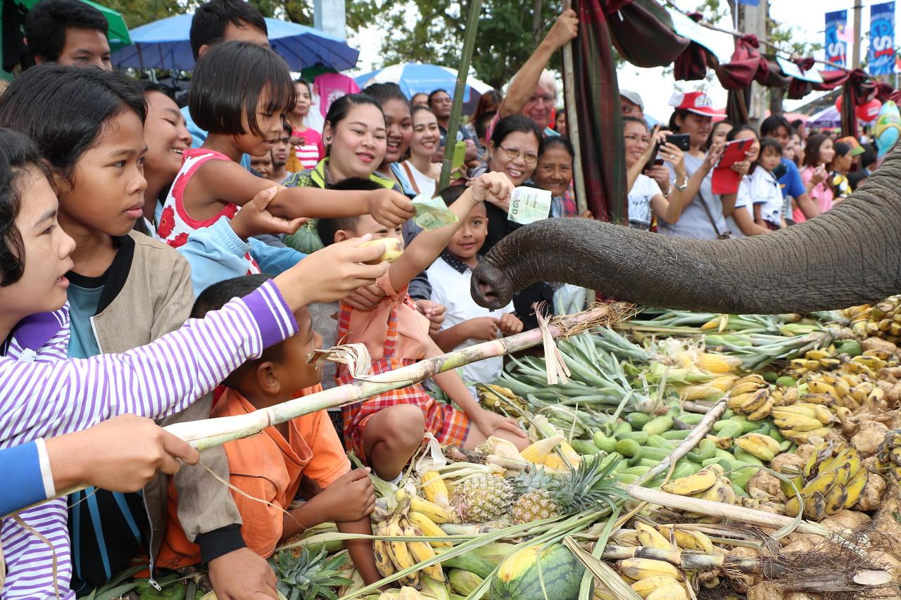 2014-11-14 Surin Elephant Welcome Feast 309