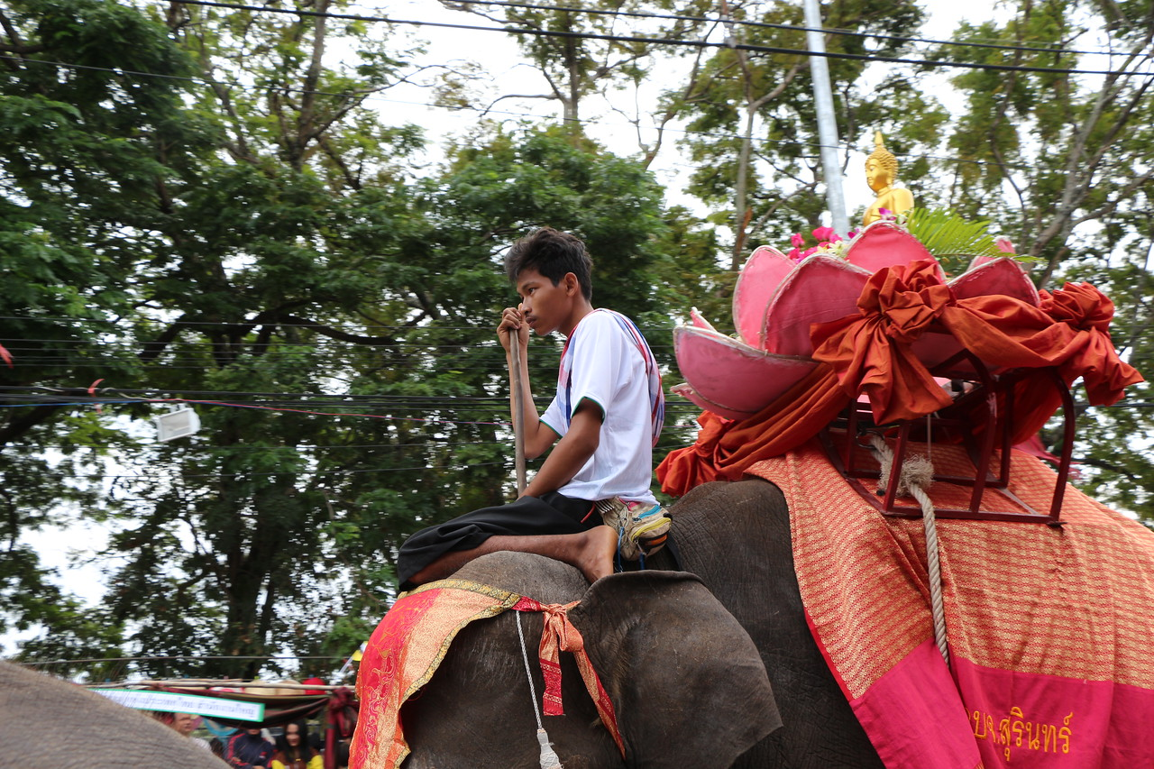 2014-11-14 Surin Elephant Welcome Feast 200