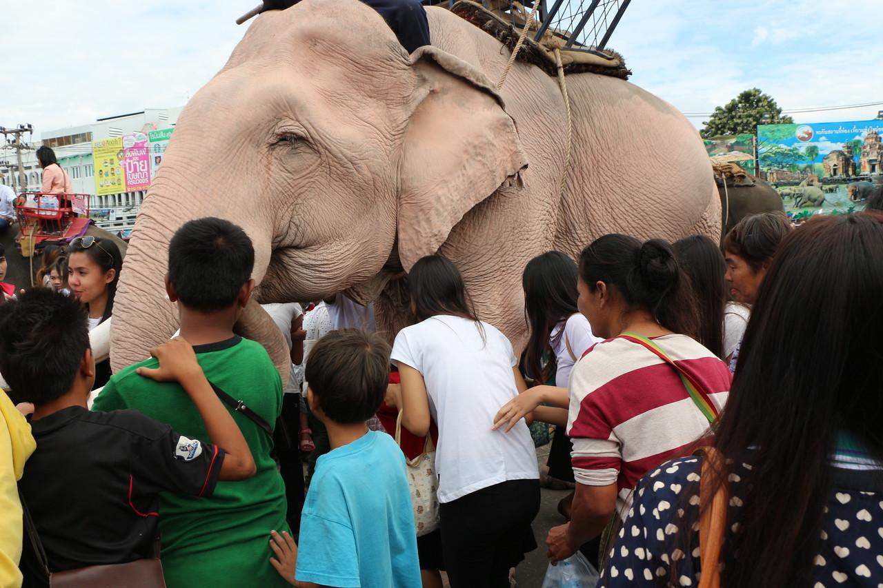 2014-11-14 Surin Elephant Welcome Feast 641