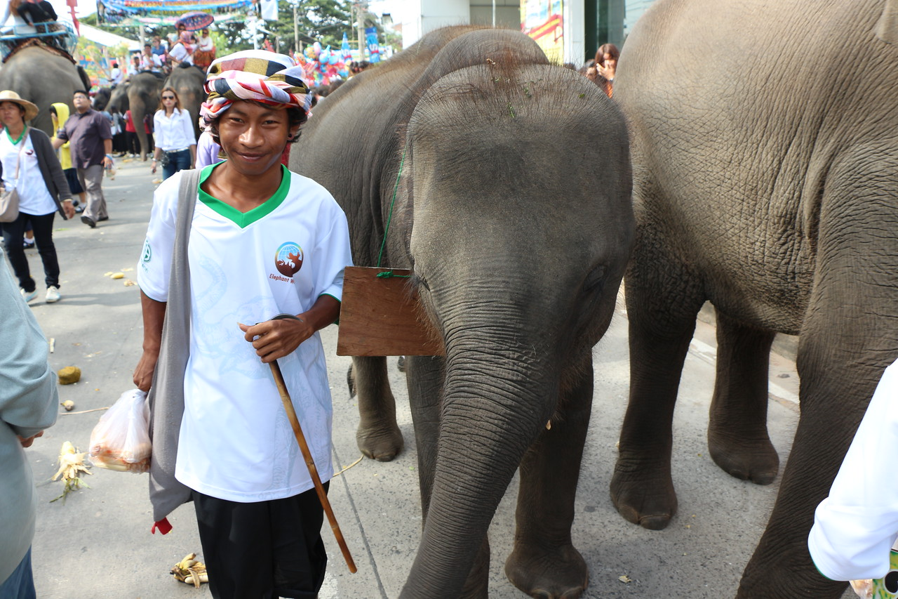 2014-11-14 Surin Elephant Welcome Feast 397