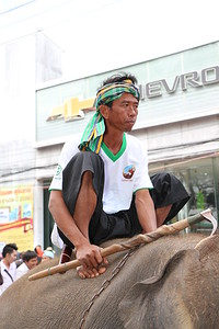 2014-11-14 Surin Elephant Welcome Feast 339