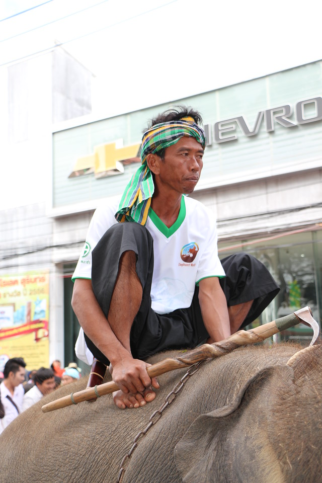 2014-11-14 Surin Elephant Welcome Feast 339