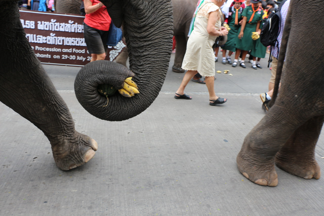 2014-11-14 Surin Elephant Welcome Feast 233
