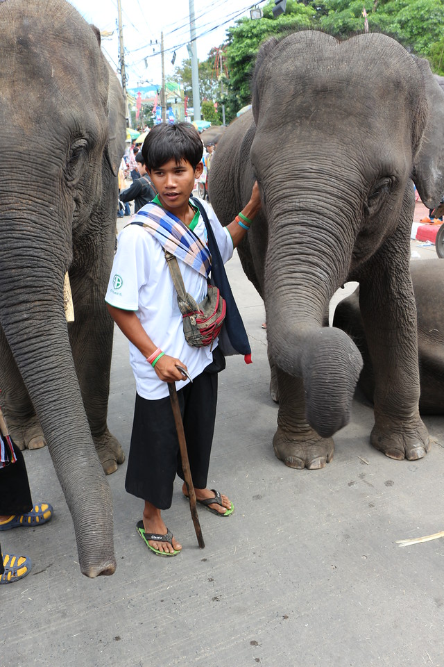 2014-11-14 Surin Elephant Welcome Feast 747