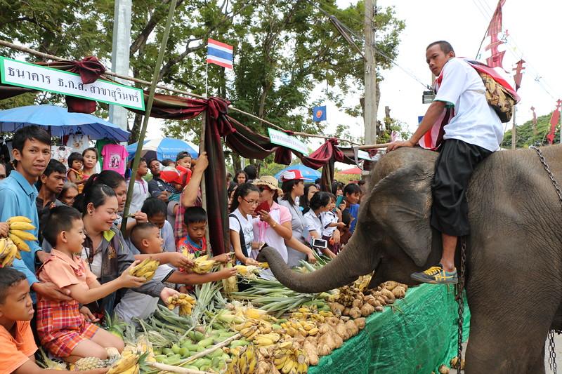 2014-11-14 Surin Elephant Welcome Feast 294.JPG