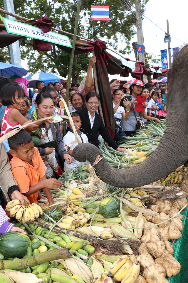 2014-11-14 Surin Elephant Welcome Feast 313