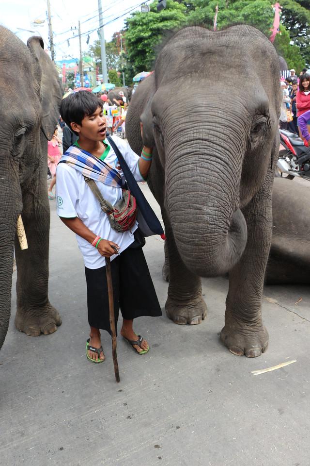 2014-11-14 Surin Elephant Welcome Feast 745